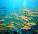 underwater-694612_by_joakant_pixabay_CC0